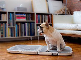 Shake ที่นั่งฉี่สุนัขแบบพกพา