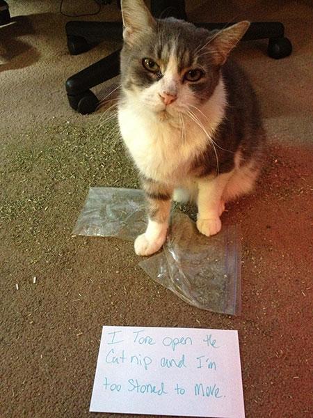 วีรกรรมของแมว