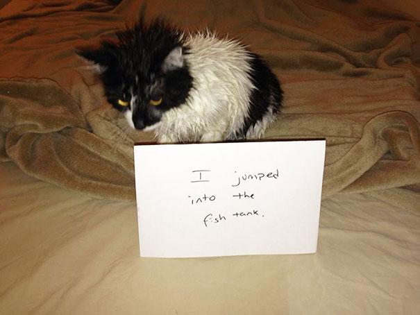 แมวกระโดดลงไปในตู้ปลา