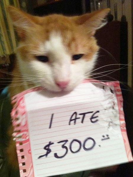 แมวกินเงิน 300 ดอลล่าร์