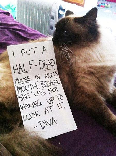 แมวคาบเอาหนูสลบไปวางไว้ในปากคุณแม่ เพราะไม่ยอมตื่นมาดู