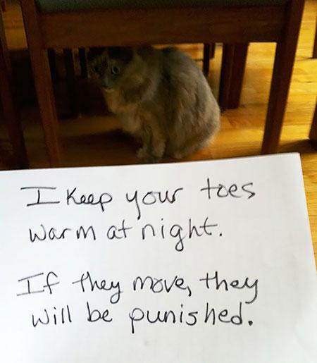 แมวคือที่ซุกนิ้วเท้าให้อุ่น แต่ถ้าขยับโดนฉันทำโทษแน่