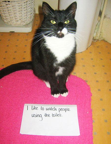 แมวชอบดูคนปลดทุกข์