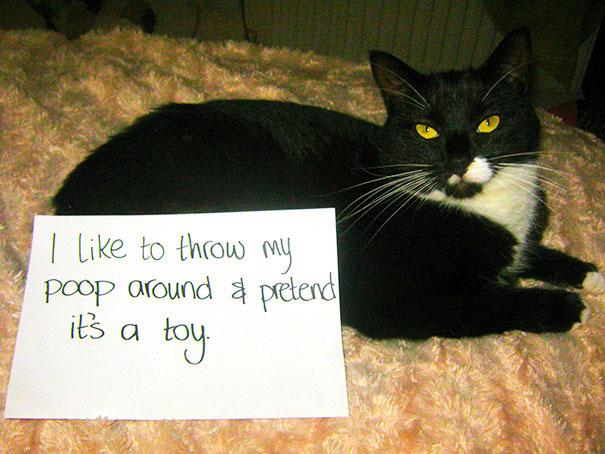 แมวชอบเขี่ยอึตัวเองเหมือนเป็นของเล่น