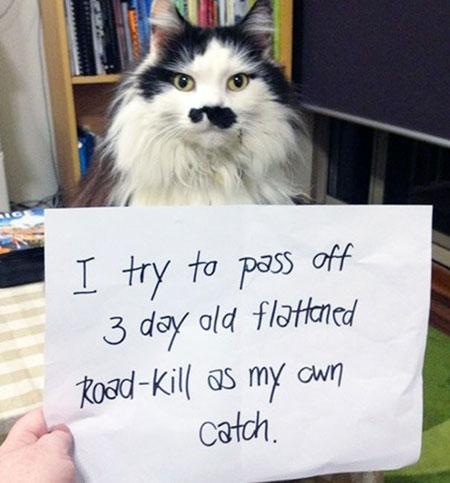 แมวดึงซากสัตว์ที่แบนอยู่ข้างถนนมาเป็นของเล่น