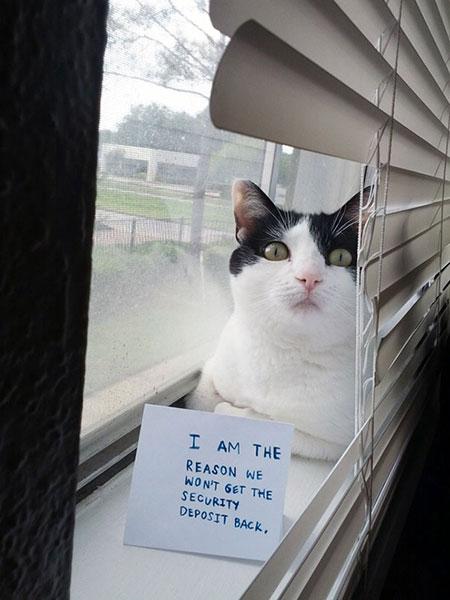 แมวตัวนี้คือสาเหตุที่ทำให้อดได้ค่ามัดจำคืน