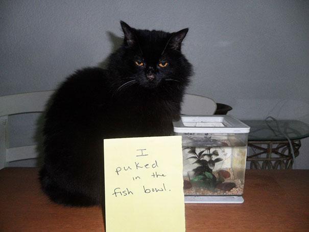แมวอ้วกลงในตู้ปลา