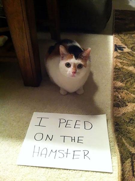 แมวเผลอฉี่รดใส่หนูแฮมสเตอร์
