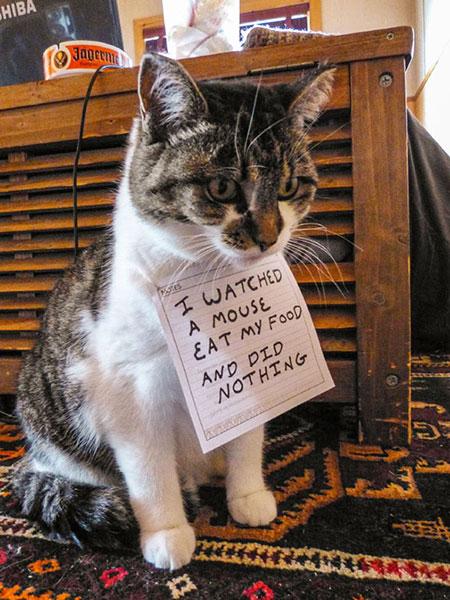 แมวเห็นหนูกินอาหารของมัน แต่ก็นั่งดูอยู่อย่างนั้น