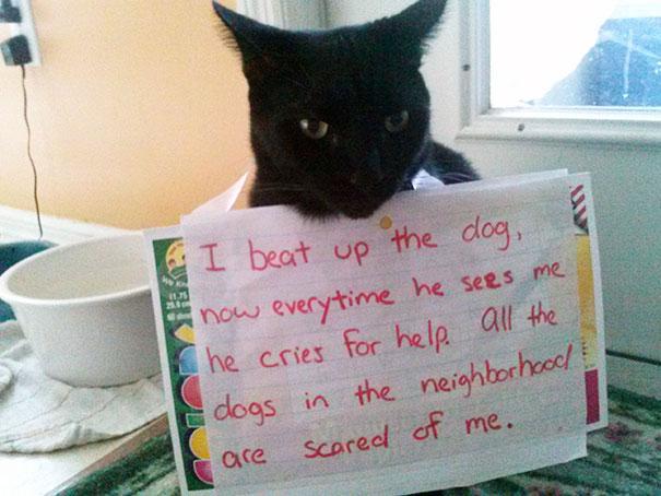 แมวเอาชนะหมาตัวหนึ่งได้ หมาทุกตัวแถวนั้นขยาดมันหมด