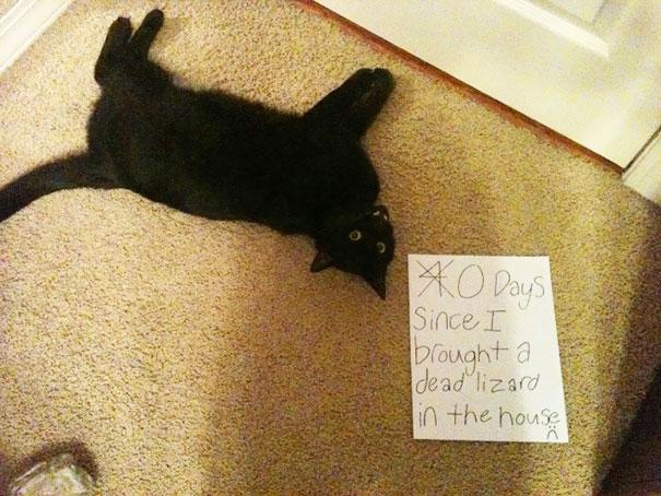 แมวเอาซากจิ้งจกมาเก็บไว้ในบ้าน 40 วัน