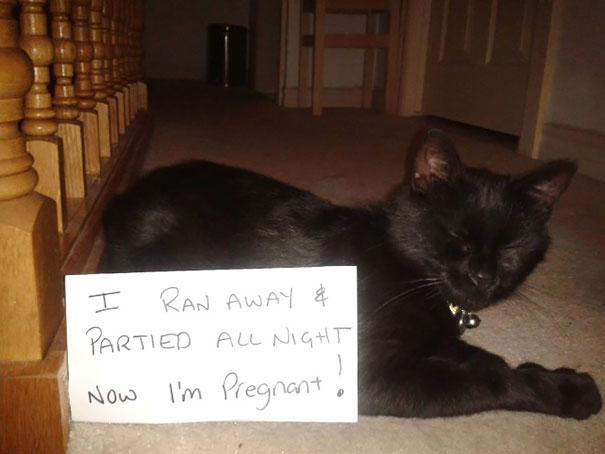 แมวแอบไปเที่ยวมาทั้งคืน ตอนนี้มันท้องแล้ว