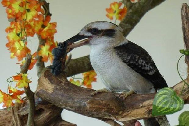 นกคุกคาบาร่าสร้างชีวิตชีวาให้ผู้สูงอายุในบ้านพักคนชรา