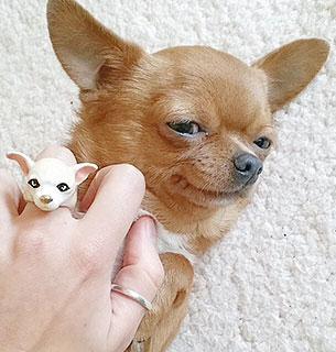 แหวนรูปสุนัขชิวาว่า