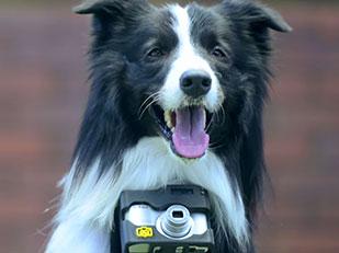 กล้องถ่ายรูปถ่ายโดยการเต้นของหัวใจสุนัข