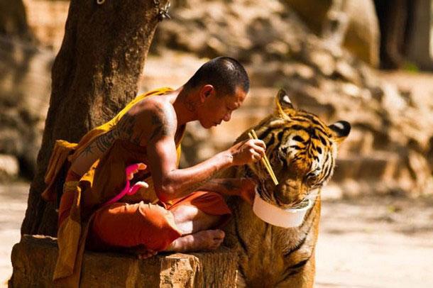 ภาพคนกับสัตว์น่าประทับใจ