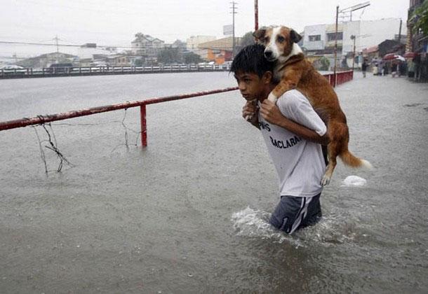 ภาพคนช่วยเหลือสัตว์น่าประทับใจ