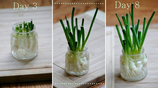 ผักและผลไม้ที่สามารถปลูกเองได้ในบ้าน