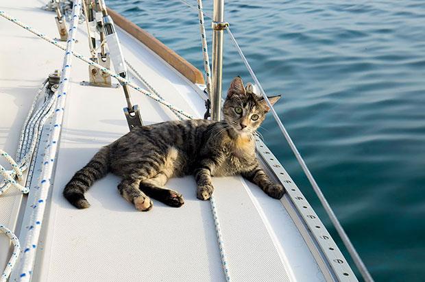 แมวกับเจ้าของล่องเรือทั่วโลก