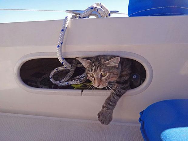 แมวของคู่รักที่ขายของทั้งหมดเพื่อล่องเรือทั่วโลก