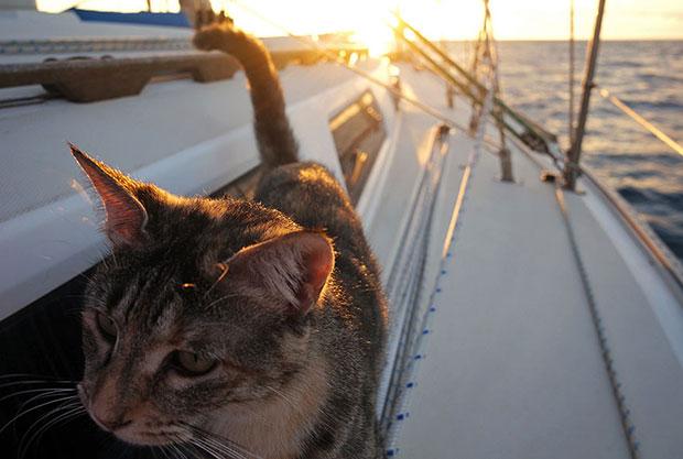 แมวของคู่รักที่ลาออกเพื่อล่องเรือทั่วโลก