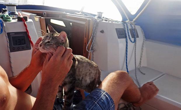 แมวและเจ้าของล่องเรือทั่วโลก