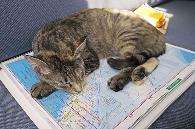 ใช้ชีวิตล่องเรือไปกับแมว