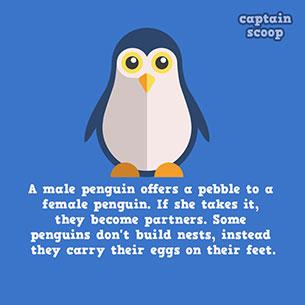 เพนกวิน