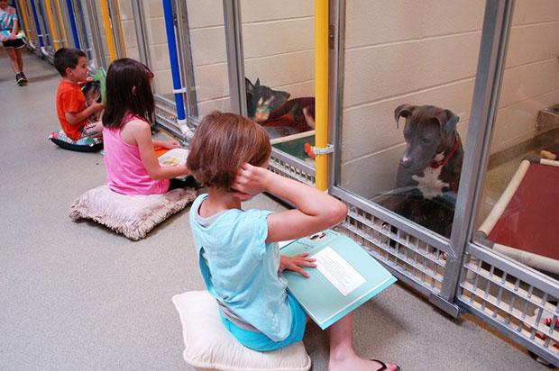 เด็กๆอ่านหนังสือให้สุนัขฟังเพื่อให้คุ้นเคยกับคน