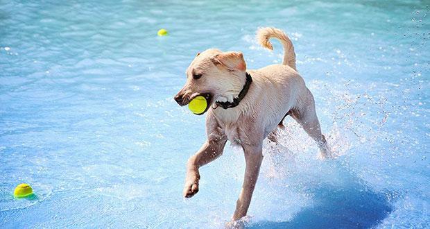 พาน้องหมาไปเล่นน้ำ