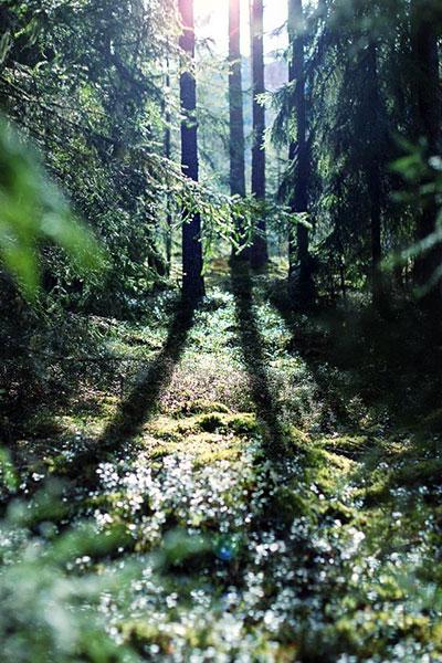 เดินสำรวจเส้นทางธรรมชาติ