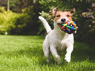 บทเรียนการเป็นมนุษย์ที่เรียนรู้ได้จากสุนัขที่เคยถูกทอดทิ้ง