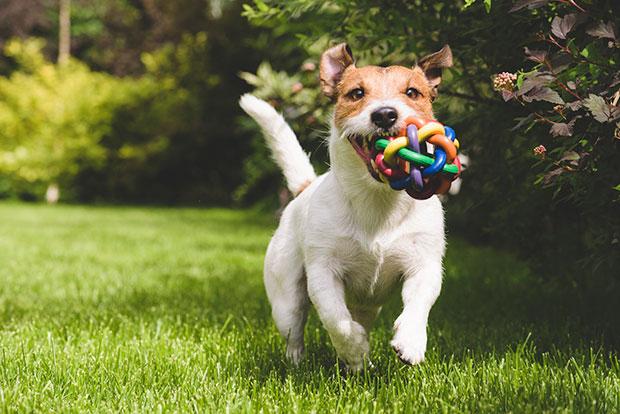 บทเรียนการเป็นมนุษย์ที่เรียนรู้ได้จากสุนัขที่เคยถูกทิ้ง