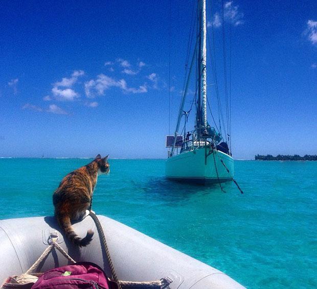 ลาออกจากงานเพื่อมาล่องเรือเที่ยวรอบโลกกับแมว