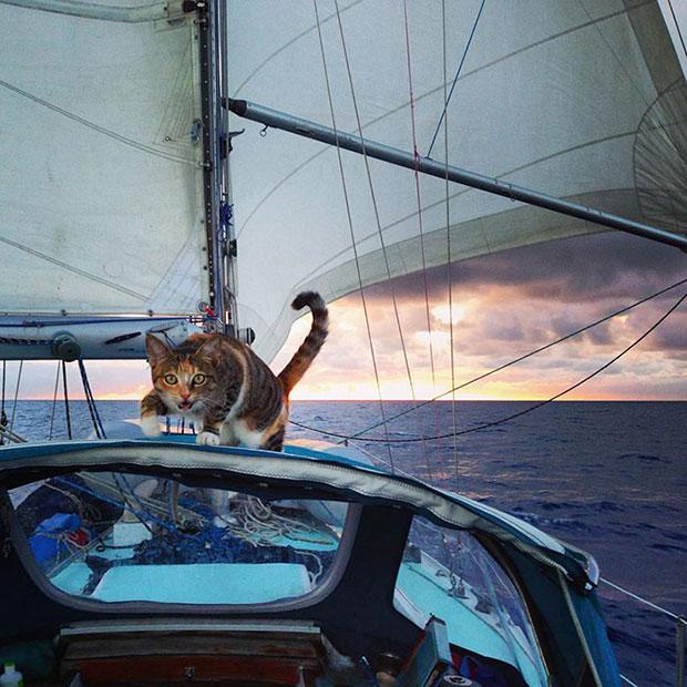 ลาออกเพื่อล่องเรือเที่ยวกับแมว