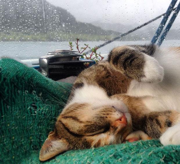 ลาออกเพื่อเที่ยวรอบโลกกับแมว