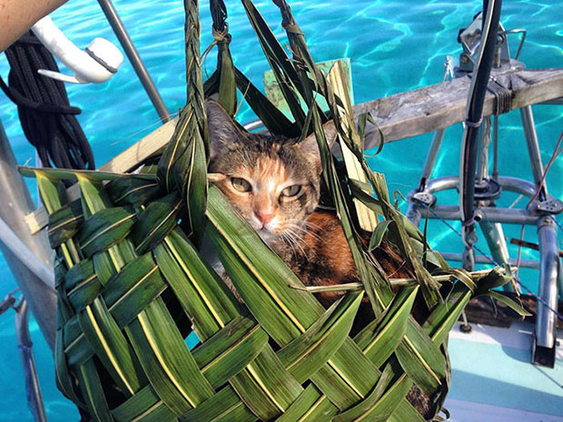 ล่องรือเที่ยวกับแมว