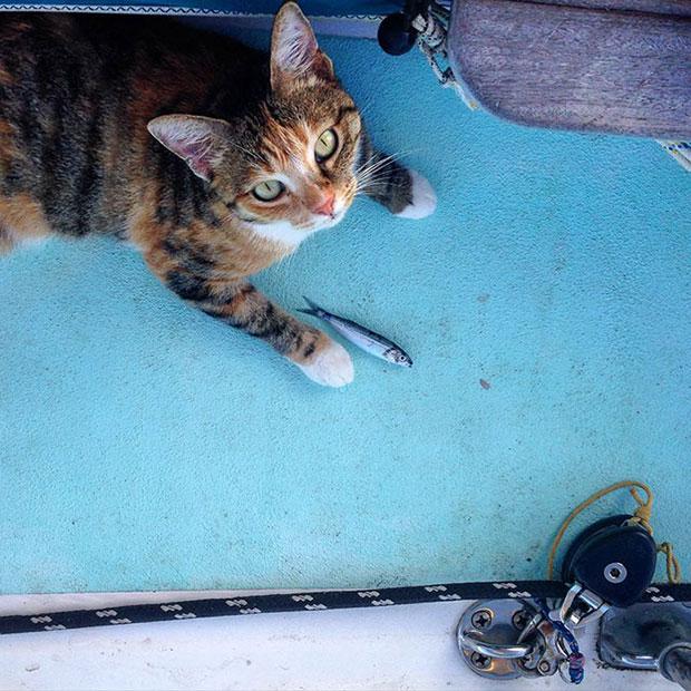 ล่องเรือเที่ยวรอบโลกกับแมวคู่ใจ
