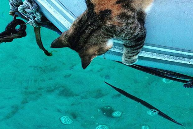 ล่องเรือเที่ยวรอบโลกกับแมว
