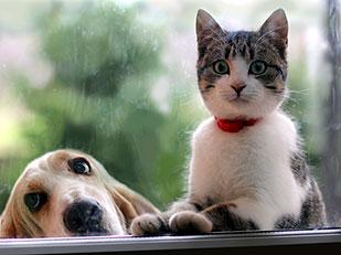 สิ่งที่แตกต่างระหว่างคนรักสุนัขกับคนรักแมว