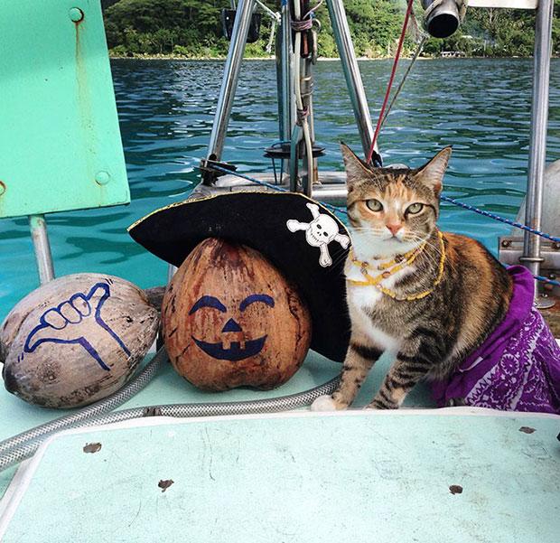 เที่ยวรอบโลกกับแมว