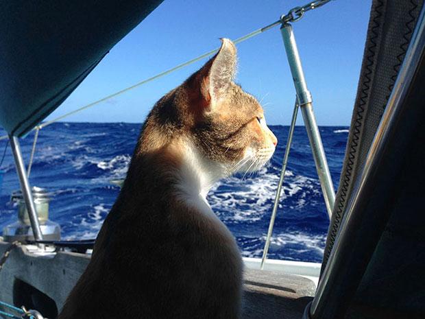 แมวล่องเรือเที่ยว