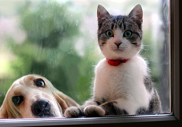 ในที่สุดก็รู้ข้อแตกต่างระหว่างคนรักสุนัขกับคนรักแมว