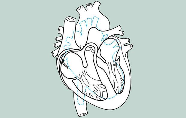 ขนาดโดยรวมของหัวใจนักวิ่ง