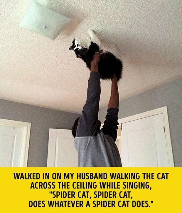 แมวแมงมุม