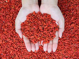 ผลไม้ที่มีสารต้านอนุมูลอิสระมากที่สุด โกจิเบอรี่