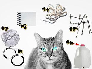 สร้างความบันเทิงให้แมวด้วยของใช้ในบ้าน