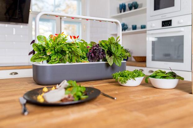 สวนผักปลูกเองง่ายๆในห้องครัว