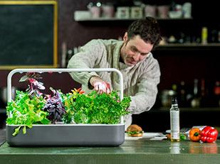 สวนผักปลูกเองในห้องครัว