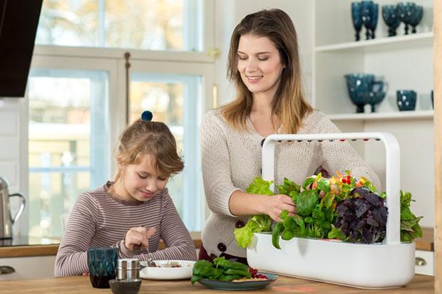 สวนผักอัจฉริยะปลูกเองง่ายๆในห้องครัว